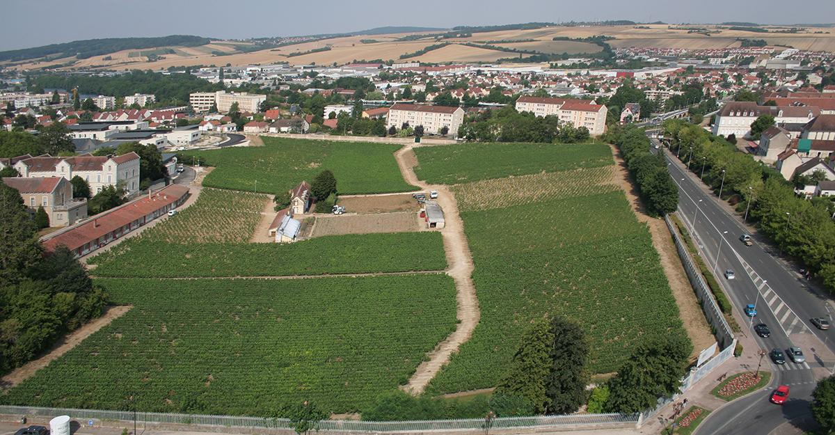 Patrimoine viticole et gastronomique tourisme attractive ville d 39 auxerre - Office de tourisme auxerre ...